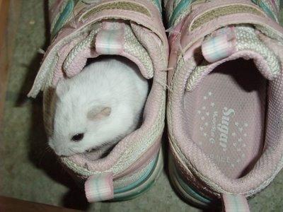 パールちゃんと靴